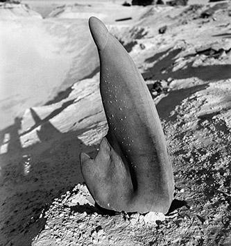 Charlotte Perriand, Grès, carrière de Bourron, vers 1935. Crédit © Charlotte Perriand.