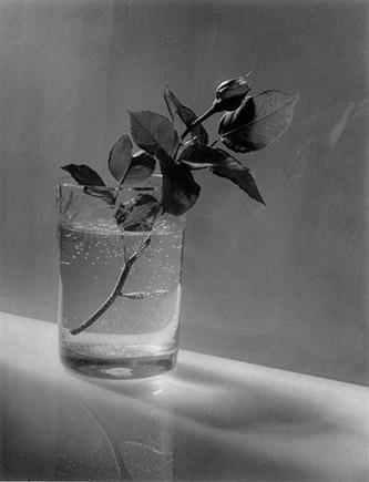 Josef Sudek White Rose Bud, 1954. Collection Frac Nouvelle-Aquitaine MÉCA. © Josef Sudek Gabina Fárová. Crédit photo DR.