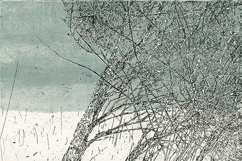 Anna Metz, Branches d'hiver, 1999-2007. Eau-forte imprimée en noir sur fond bleu, 84 × 125 mm. Fondation Custodia, Collection Frits Lugt, Paris (don J. P. Filedt Kok).