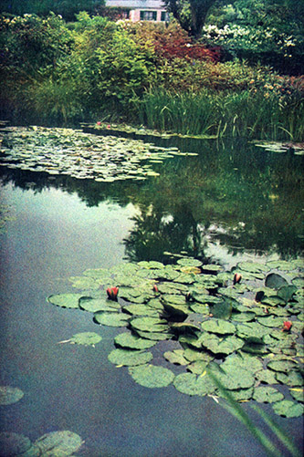Bernard Plossu (né en 1945), Jardin de Claude Monet, Giverny, juin 2011. Tirage Fresson, 27,4 x 18,5 cm. Giverny, musée des impressionnismes, MDIG 2012.3.34. © Bernard Plossu. © Giverny, musée des impressionnismes.