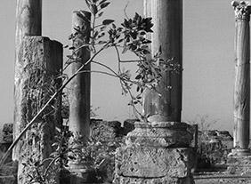 """🔊 """"L'Atelier de la nature, 1860-1910"""" au musée des impressionnismes, Giverny, du 12 septembre 2020 au 3 janvier 2021"""