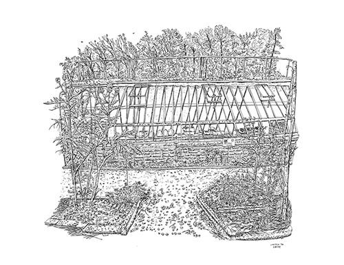 Christelle Téa, Le cardon, la serre, Potager, Propriété Caillebotte, Yerres, 8.VII.2019. Encre de Chine sur papier, 50 x 65 cm.