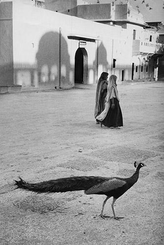 Marc Riboud, Paon à Jaipur, Inde, 1956. © Marc Riboud / Fonds Marc Riboud au MNAAG.