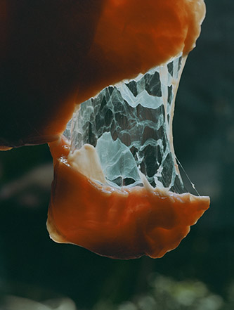 Lucile Boiron, Womb. © Lucile Boiron.
