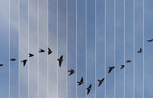 Edouard Taufenbach & Bastien Pourtout, Le Bleu du ciel. © Edouard Taufenbach & Bastien Pourtout. Courtesy Prix Swiss Life à 4 mains & Galerie Thierry Bigaignon.