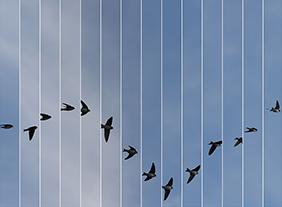 """🔊 """"Le Bleu du ciel"""" Edouard Taufenbach (photographe) et Régis Campo (compositeur) Lauréats 2020 du Prix Swiss Life à 4 mains, à la Galerie Thierry Bigaignon, du 2 au 16 février 2021"""
