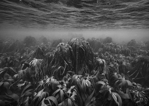 Nicolas Floc'h, Initium Maris, 2015 – 2021. Extrait de la sélection de 6 photographies, impressions carbone Initium Maris est soutenu par la Fondation de France dans le cadre du programme « les futurs du littoral et de la mer ». Dimensions variables. Co-production La Graineterie.