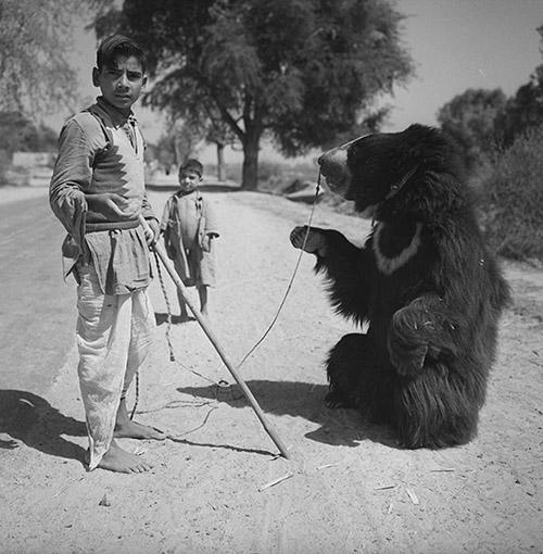 Hélène Roger-Viollet, Montreur d'ours. Environs d'Agrâ (Uttar Pradesh, Inde), 1961. © Hélène Roger-Viollet / Roger-Viollet.