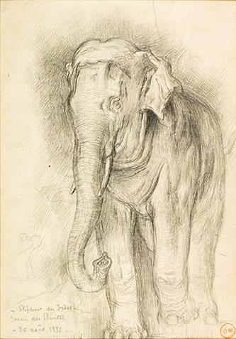 Gustave Moreau, L'Éléphant Bangkok du Jardin des Plantes (Étude préparatoire pour Le Rat et l'Éléphant), 1881. Graphite sur papier-calque contrecollé, dim. 30 x 19 cm. Paris, musée Gustave Moreau, Des. 1097. © RMN-GP / René-Gabriel Ojéda.