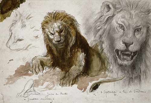 Gustave Moreau, Études de lions (Étude préparatoire pour Le Lion et le Rat), 1881. Graphite, aquarelle, gouache, dim. 19 x 27,5 cm. Paris, musée Gustave Moreau. Cat. 520. © RMN-GP / René-Gabriel Ojéda.