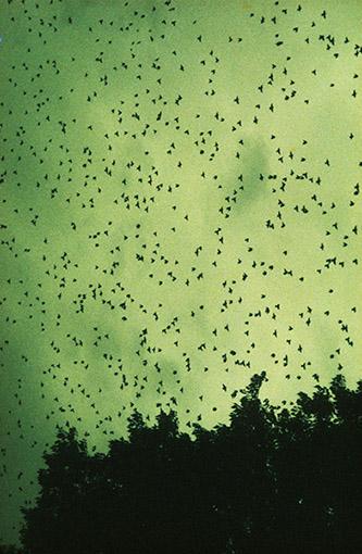 Dolorès Marat, Les Oiseaux à Marseille, France, 2003. © Dolorès Marat.