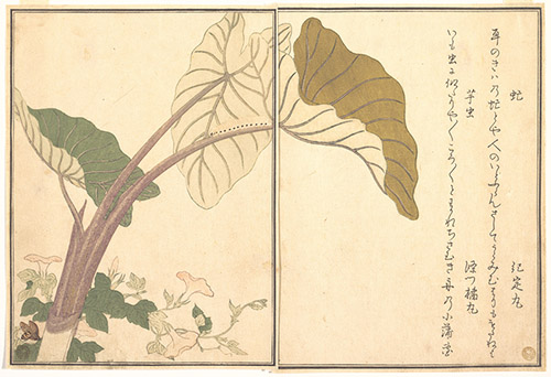 Kitagawa Utamaro, Taon et chenille, extrait d'Album d'insectes choisis, 1788. Xylographie, 18,4 x 26,7 cm. The Metropolitan Museum of Art, New York / Rogers Fund, 1918.